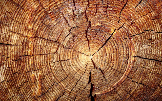 Tree-rings reveal secret clocks that could reset key dates across the ancient world