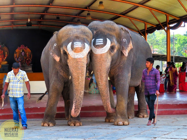 Elephant Worship in South India