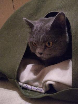 kryjówka dla kota diy