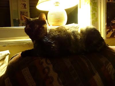 Η Βούρτσα. Μια ζεστή και χαδιάρα γάτα.