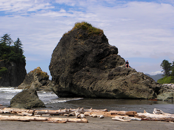 A large sea stack with vegatation and driftwood in foreground. Other sea stacks in background