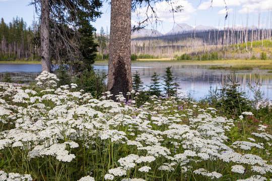 One last look at Howe Lake