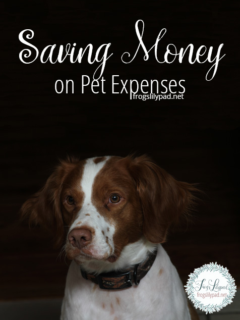 Saving Money on Pet Expenses. Four easy ways to save on your favorite furry or feather member of the family.