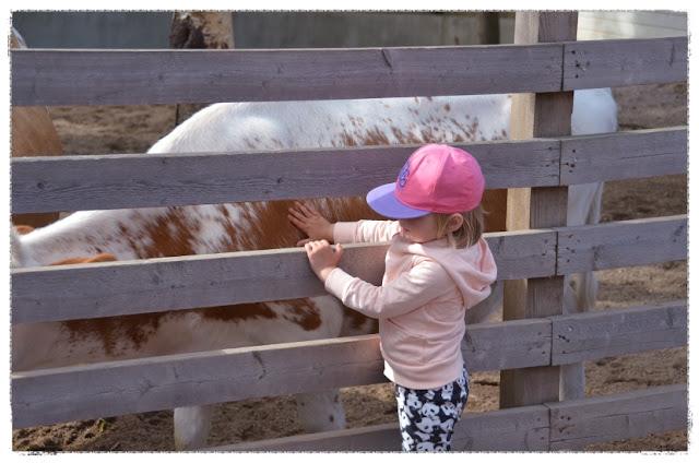 Tekeimstä lasten kanssa, Eläimiä