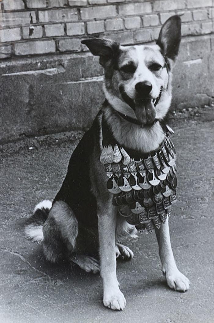 Как Снимали Фильм «Собачье Сердце»