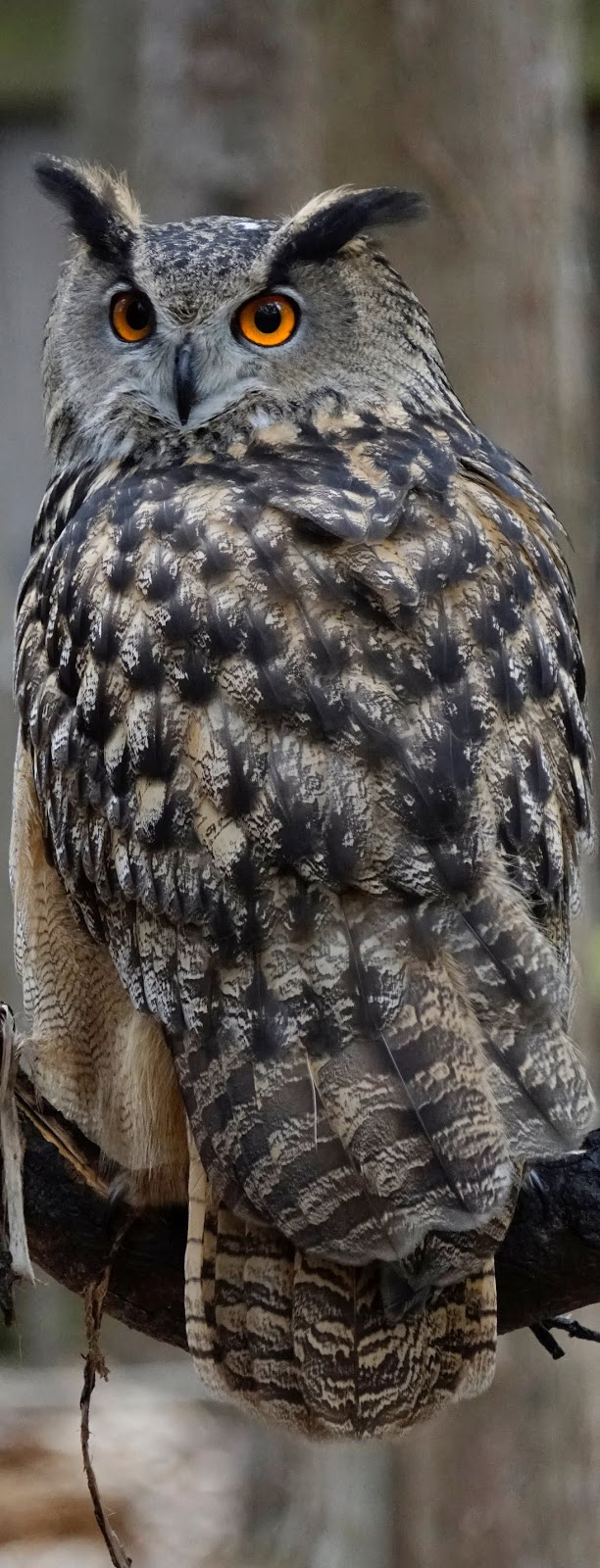 Picture of an owl.
