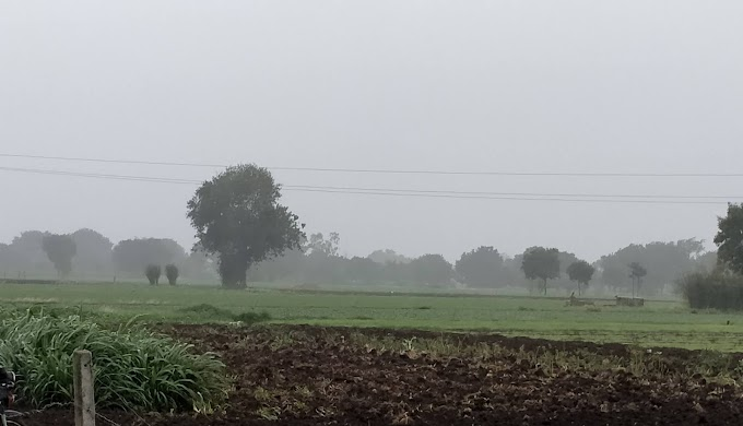 संकट: मंदसौर जिले में अब तक सिर्फ 7 इंच बारिश ही हुई, 21 साल में हर बार बदला मानसून का रुख, 4 साल तक कभी नहीं रहा एक समान, 75% ही बोवनी हो पाई