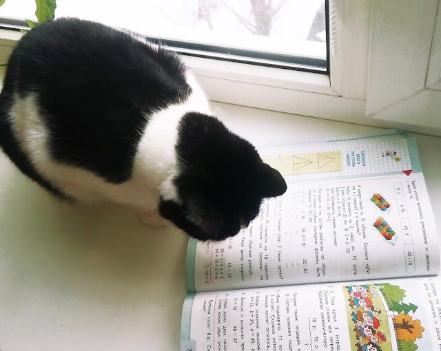 У нас даже кошка читает... Увлеклась математикой)))