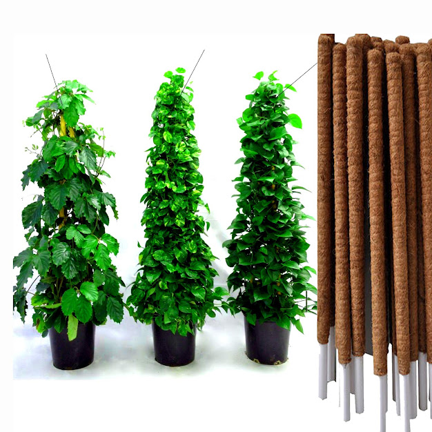Coir Mos Stick Natural - 4Ft