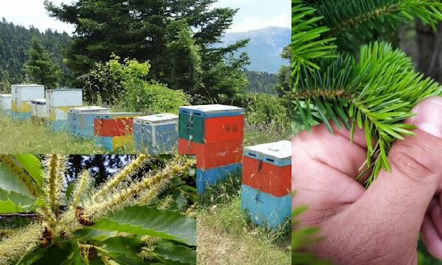 Γιατί δεν βάζουν μέλι τα μελίσσια μας... Τι πραγματικά συμβαίνει