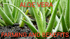Aloe Vera Farming Process And Benefits
