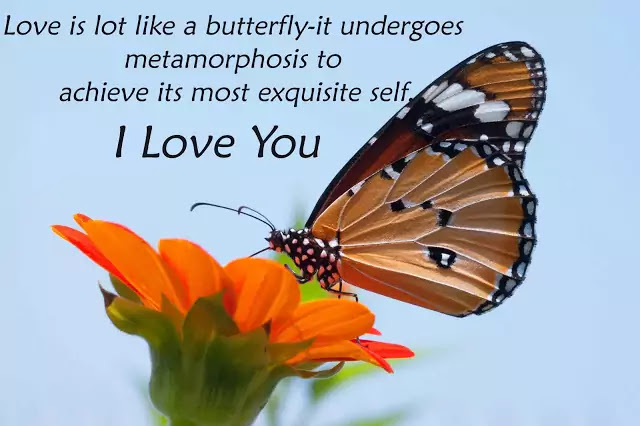 inspirational love butterfly quotes