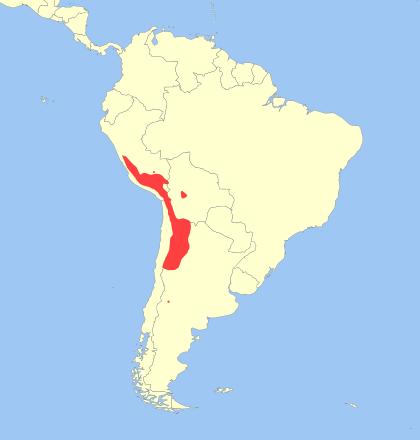 Leopardus jacobita