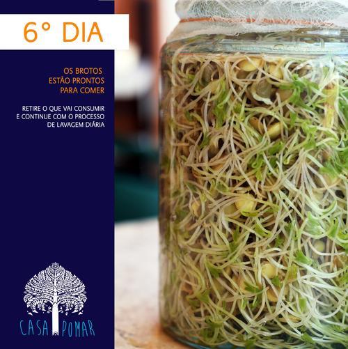 germinar lentilhas em casa