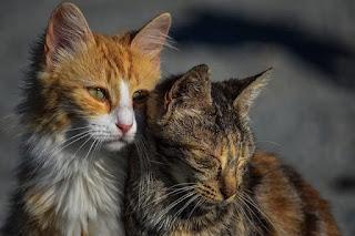 Depresi pada hewan dan Tanda-Tandanya