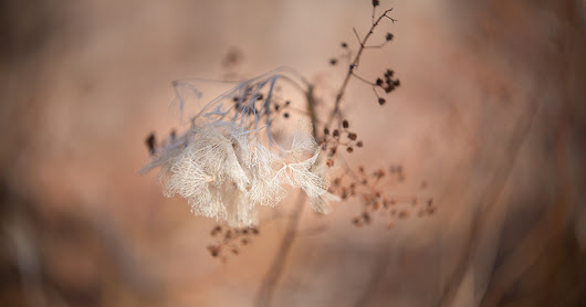 Kathleen Clemons Photography: Lensbaby's New Twist 60