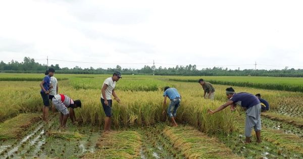 Sherpur students are helping farmers in times of Covid crisis