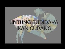 Untung Budidaya Ikan Cupang