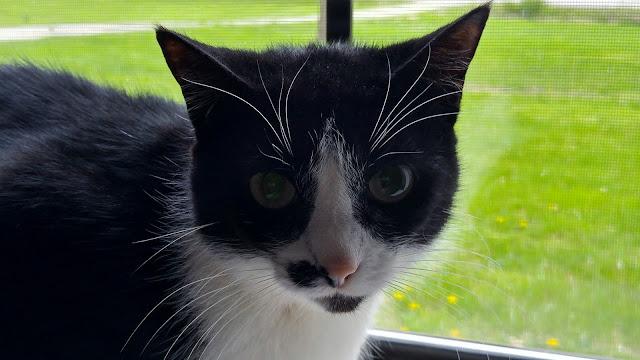 Dottie, happy cat in the window