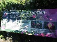 Heritage rose garden - Christchurch Botanic Gardens, New Zealand