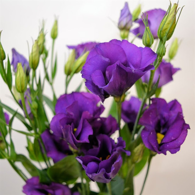 Hoa cát tường có ý nghĩa gì? ~ Shop hoa tươi đẹp Cocina Economica