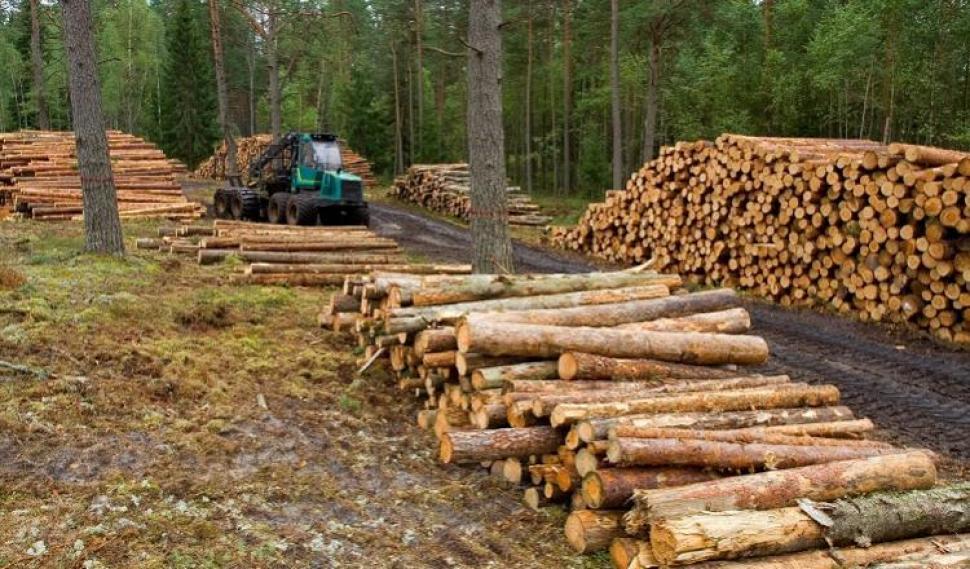 Se consolida el uso de la madera en la construcción y la refacción de viviendas