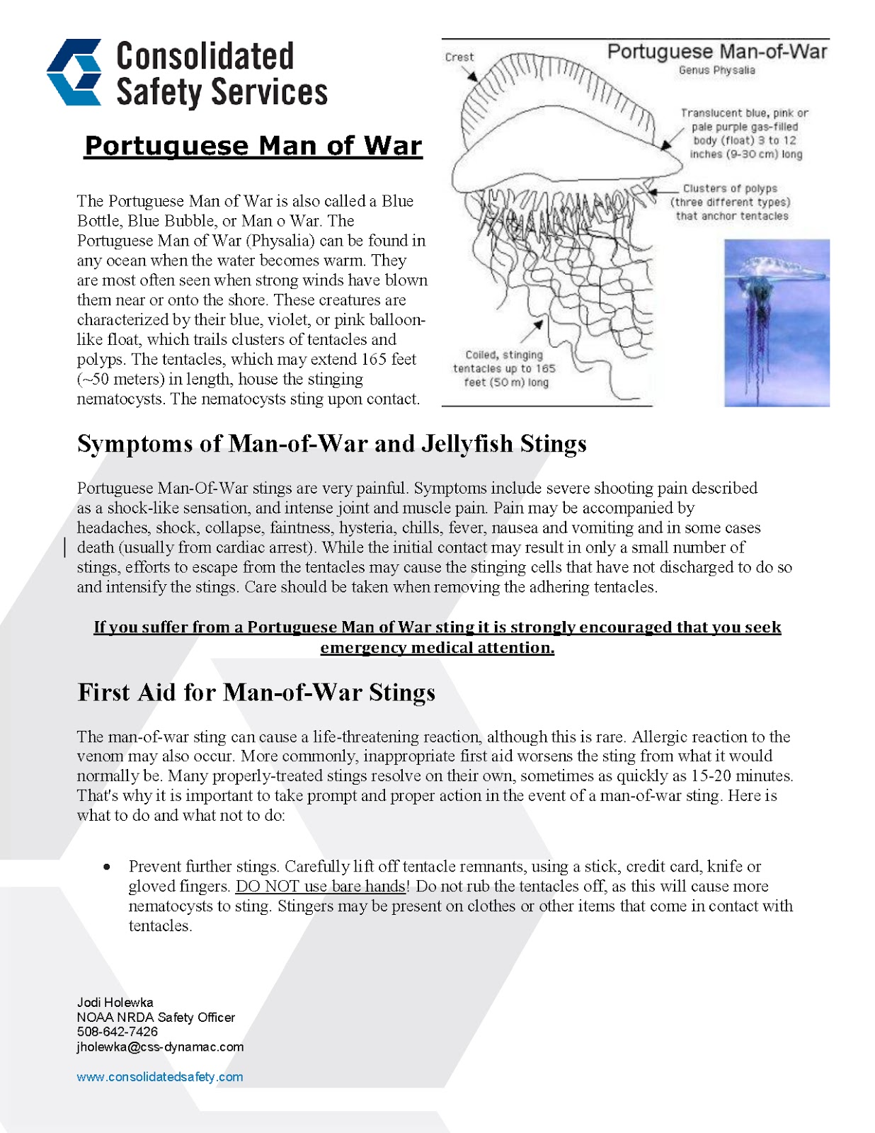Portuguese Man Of War Facts 120