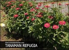 Manfaat Refugia bagi tanaman budidaya