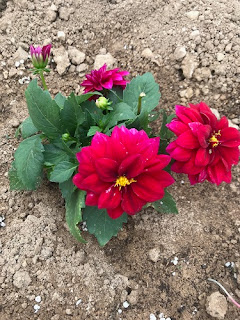 çiçek sevgisi yazıları