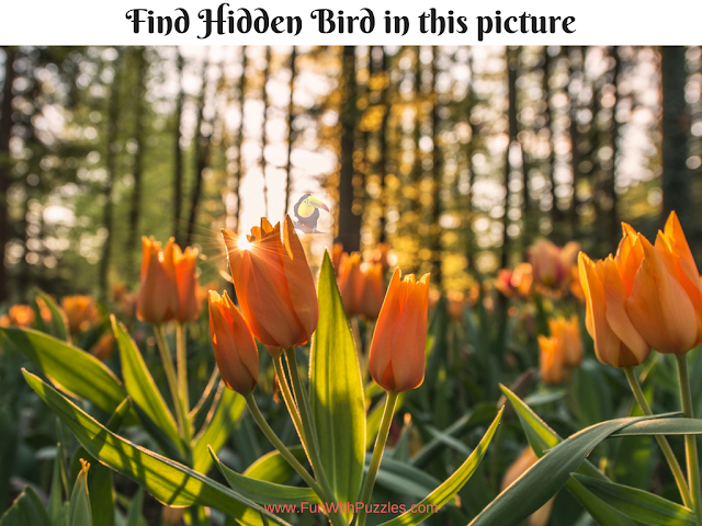 Hidden Bird Picture Brain Teaser