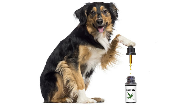 CBD Oil Pet