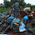 OMG! Nigeria Customs Service impounds 24,273 cartons of smuggled poultry products worth over N256m...photos