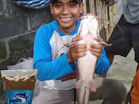 Umpan Ikan Lele Khusus Indukan