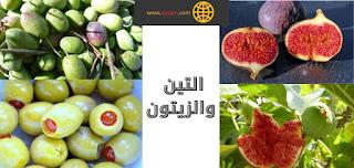 الإعجاز في التين والزيتون المذكورين في القرآن