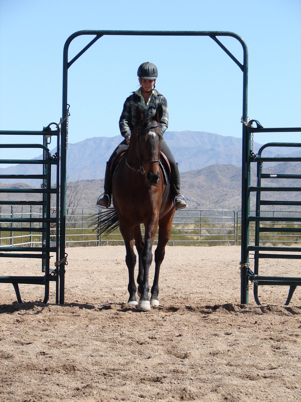 Horsemanship and re-educating a Thoroughbred