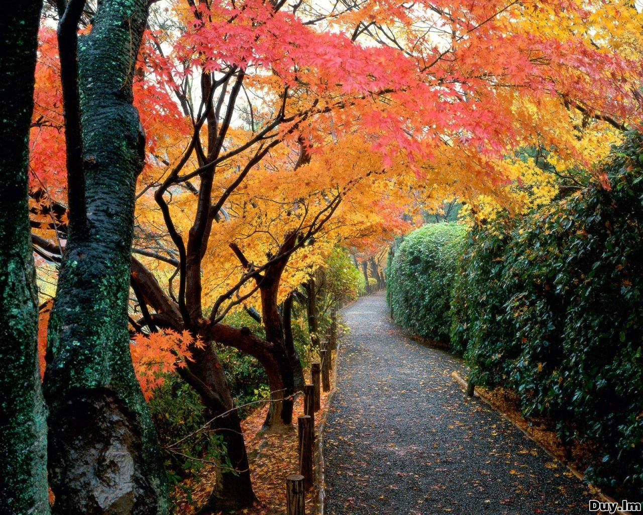 Daily Cool Pictures Gallery: 45 Wonderful Autumn ...