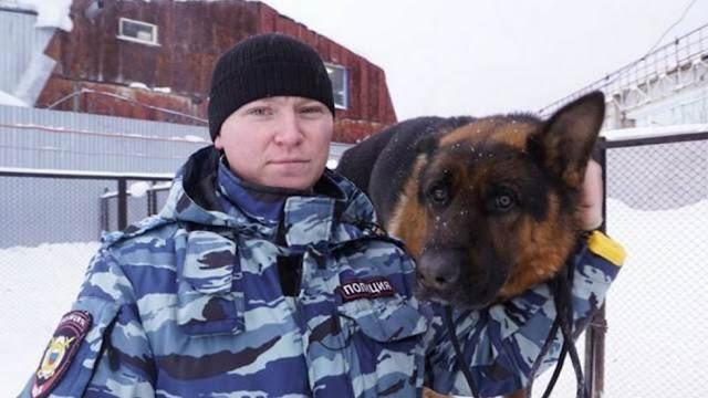 Служебная собака спасла замерзавшего в лесу мальчика. Она вышла на след мальчика и нашла ребенка, когда он начал засыпать от холода