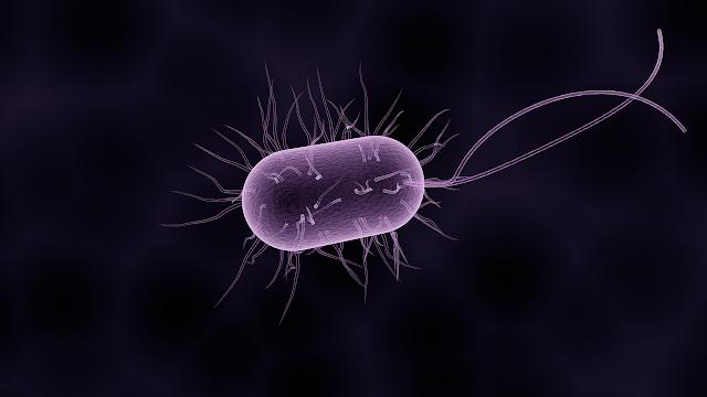 Probiotyk antybiotyk mikroflora cieknące jelito zespół nieszczelnego jelita dietetyk kraków dietoterapia medycyna funkcjonalna FODMAPs SIBO Crohn ZJD