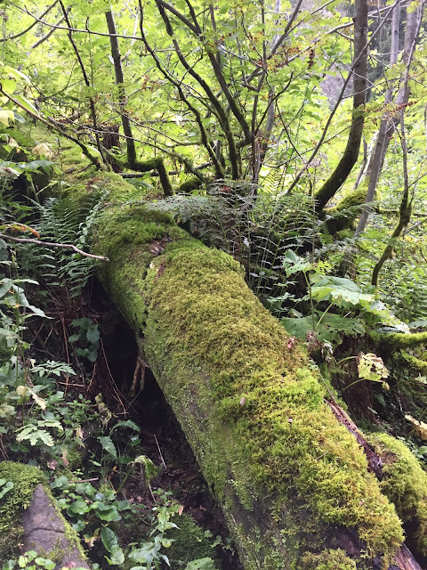 mit Moos überwachsener Baumstamm