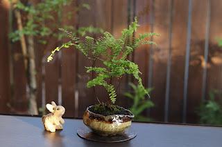 山野草盆栽とウサギの人形