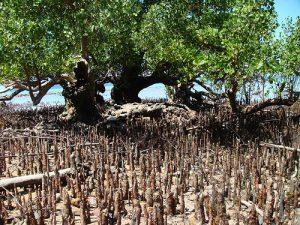 ciri ciri akar tumbuhan