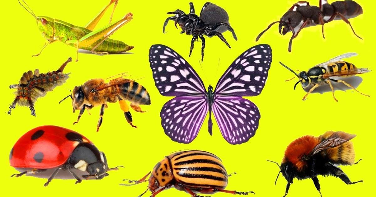 Днем фотографа, картинки с надписями насекомых