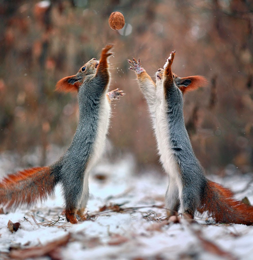 adorable squirrel photos vadim trunov-9