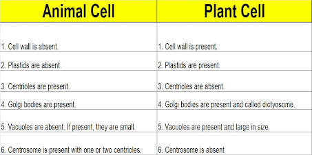 9th Class Science Notes in English chapter 5 Fundamental Unit of Life : Cell