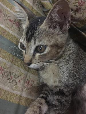 ahli baru dalam keluarga, kucing