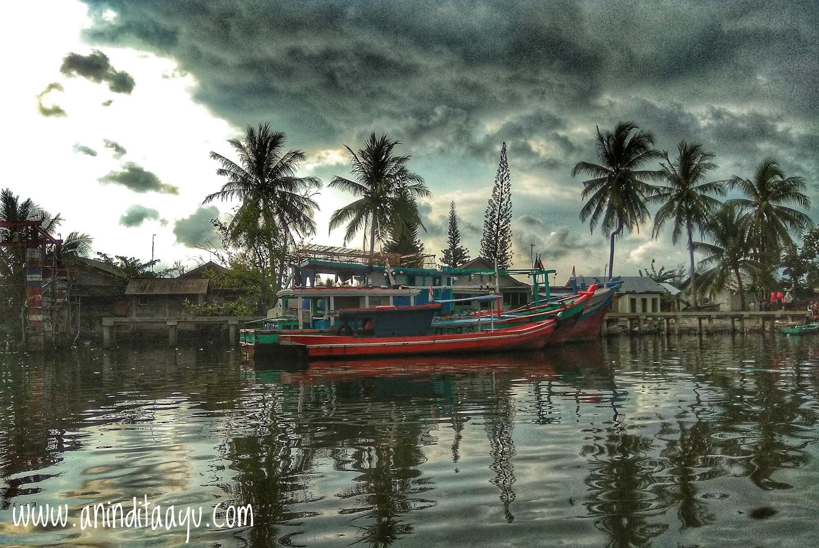Wisata Hutan Mangrove Bengkulu