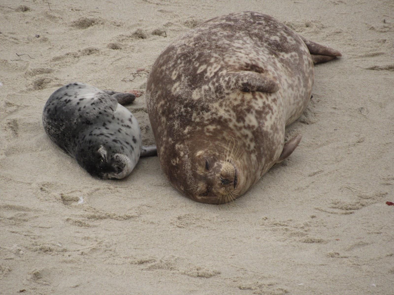 Ephemeral Curios Sea Puppies