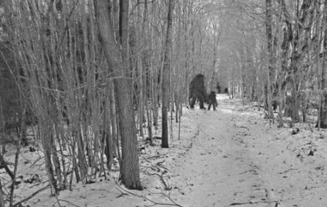 Old Photo of Bigfoot?