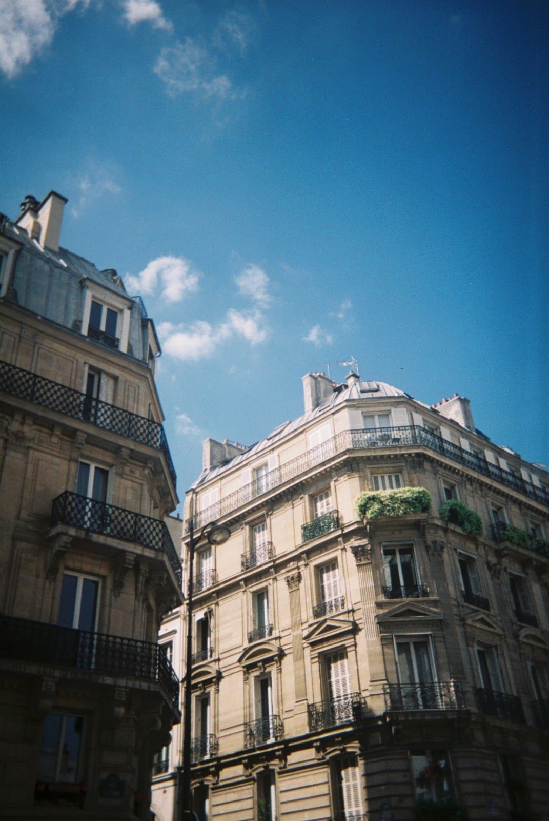Disposable Series #11 | The Paris Edition