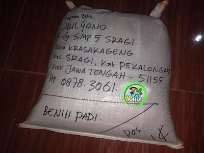 Benih Padi TRISAKTI Untuk  Mulyono Pekalongan Jatim    (Sesudah di Packing)